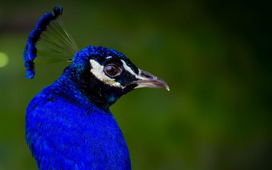 Bird_Detroit_Zoo_2b